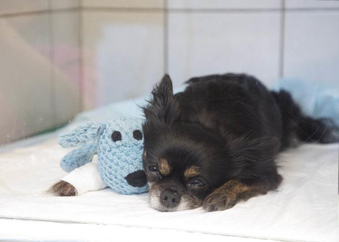 clinique-veterinaire-V24-hospitalisation-
