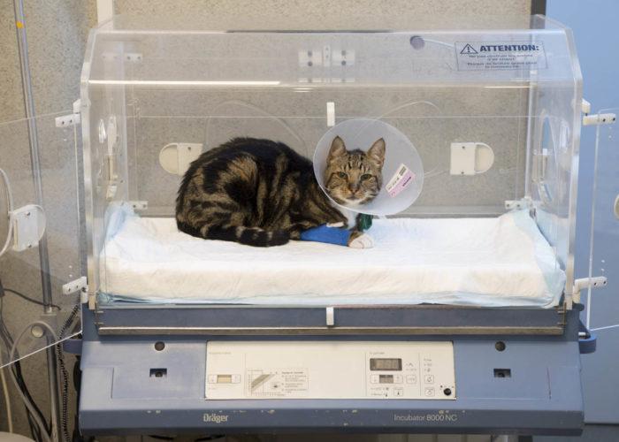clinique-veterinaire-V24-hospitalisation-courbevoie