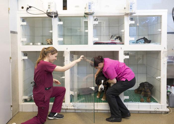 clinique-veterinaire-V24-hospitalisation--levallois