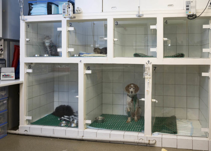 clinique-veterinaire-V24-hospitalisation-neuilly