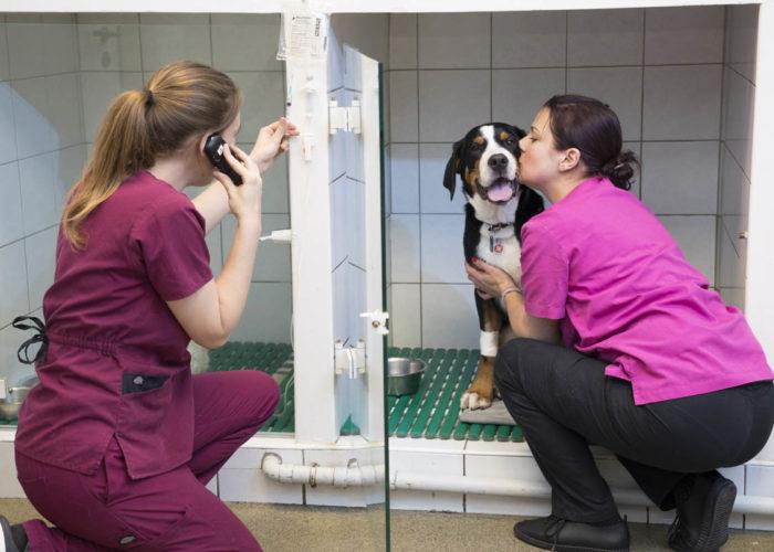 clinique-veterinaire-V24-hospitalisation--neuilly