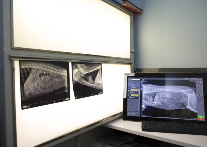 clinique-veterinaire-V24-radiographie
