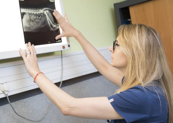 clinique-veterinaire-V24-radiographie-courbevoie
