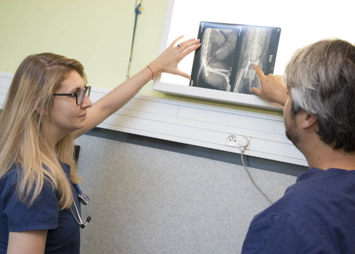 clinique-veterinaire-V24-radiographie-pari